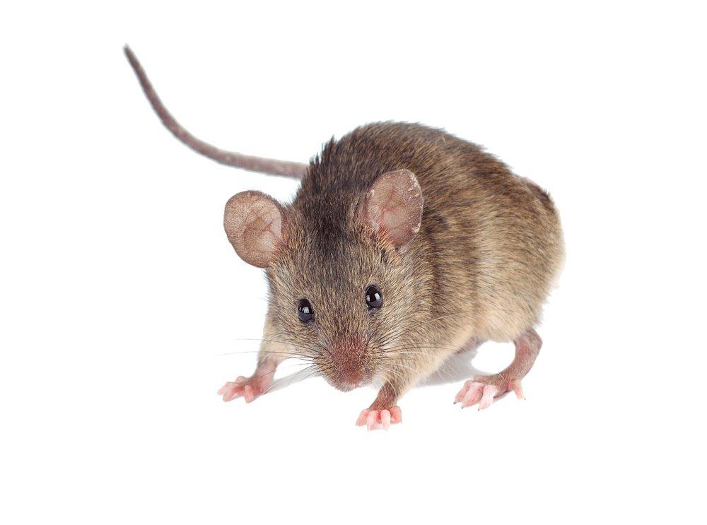 Elite Pest Solutions Llc Varmint Amp Rodent Control