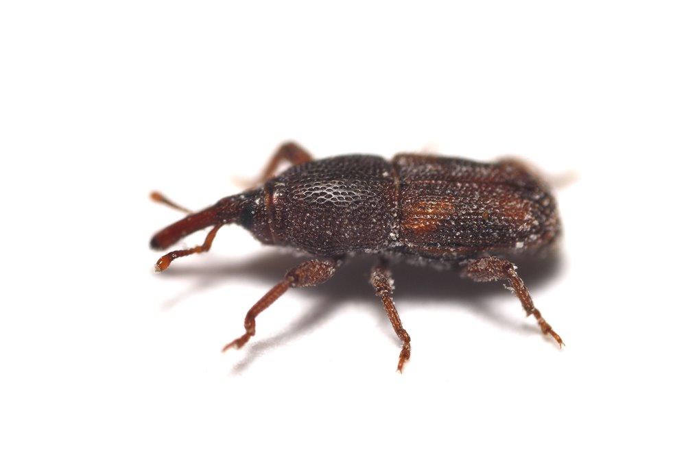 Elite Pest Solutions LLC | Spider & Insect control - Elite