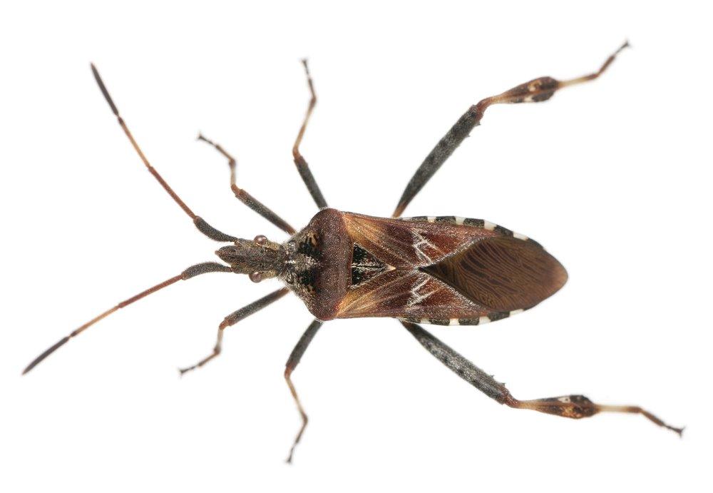 Elite Pest Solutions Llc Spider Amp Insect Control Elite